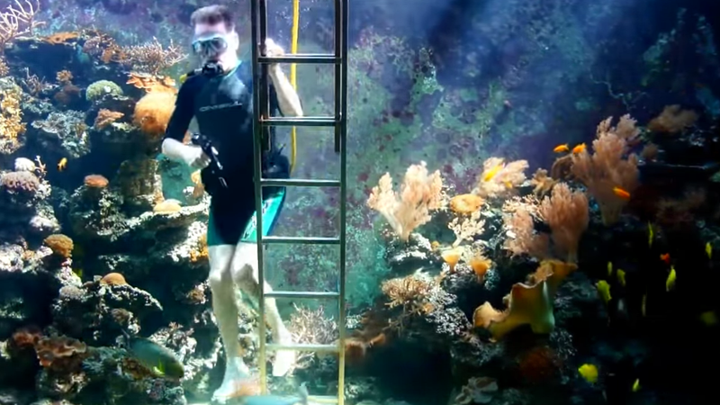 A 10 000 gallon fish tank seems like too much work for 10000 gallon fish tank