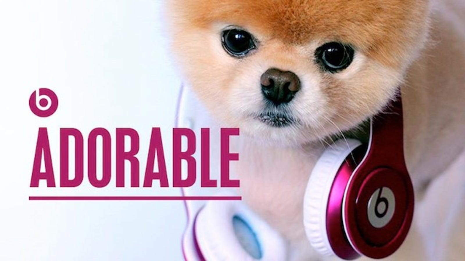 pink earbuds for women - Internet's Cutest Dog Endorses World's Dumbest Headphones