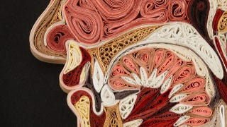 Illustration for article titled These Crazily Detailed Anatomical Images Are Made With Curled Paper
