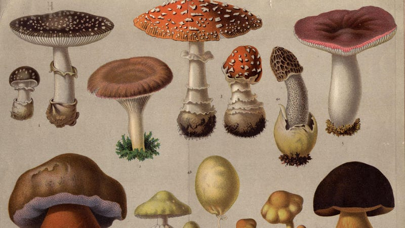 Illustration for article titled Man Rips Off Own Penis After Eating Evil Mushrooms