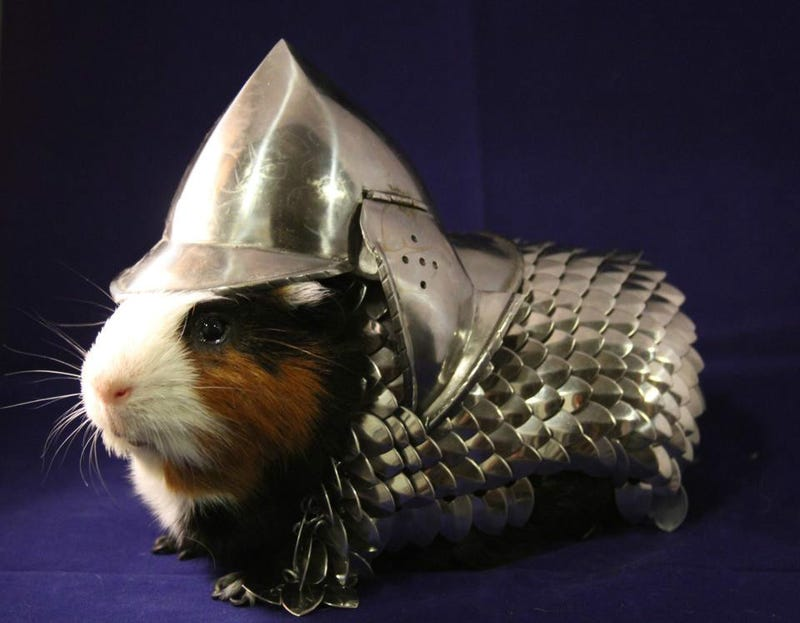 Illustration for article titled Keep your guinea pig protected with a rodent-sized suit of armor