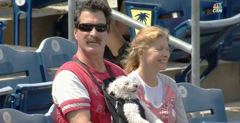 Illustration for article titled I Wish I Was This Dog In A Baby Carrier At The Phillies Game