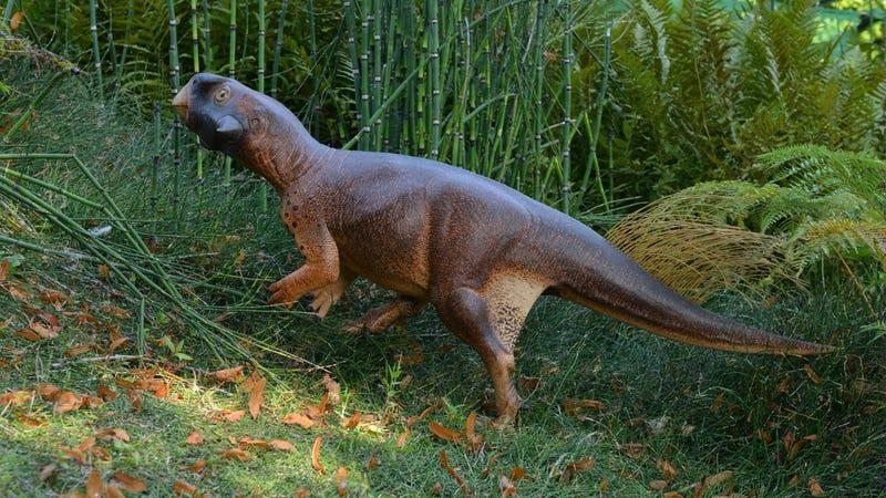 A life-size, 3D model of Psittacosaurus. (Image: Jakob Vinther, University of Bristol and Bob Nicholls (Paleocreations.com))