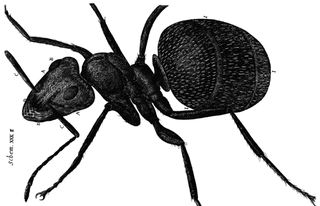 Illustration for article titled Robert Hooke Got An Ant Drunk For Science