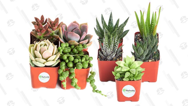 Fill Your Window Sill With These On-Sale Succulents From Amazon