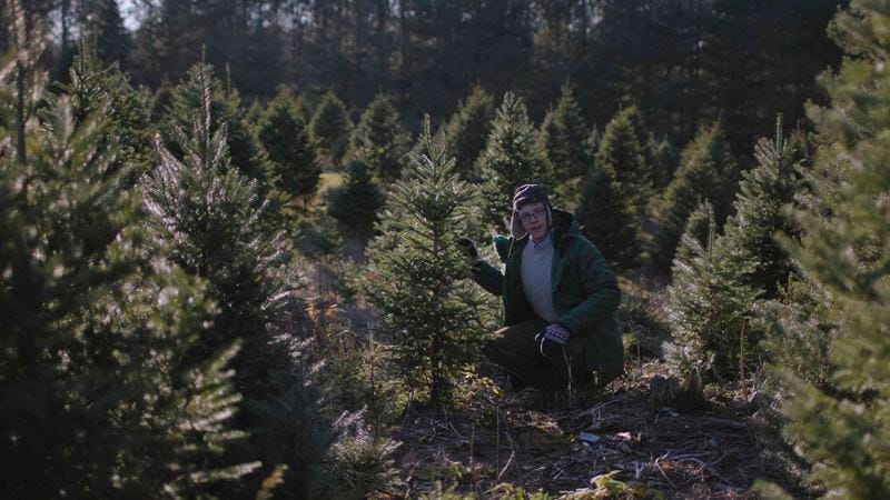 Joe Pera Helps You Find The Perfect Christmas Tree in this Adult ...