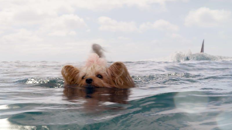 Swim, little doggie, swim.