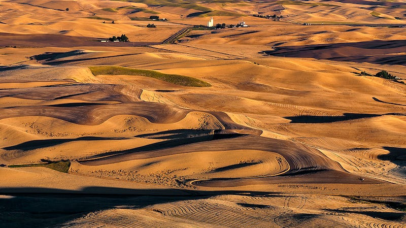 Wheat harvest in the Palouse (Image: Charles Knowles)