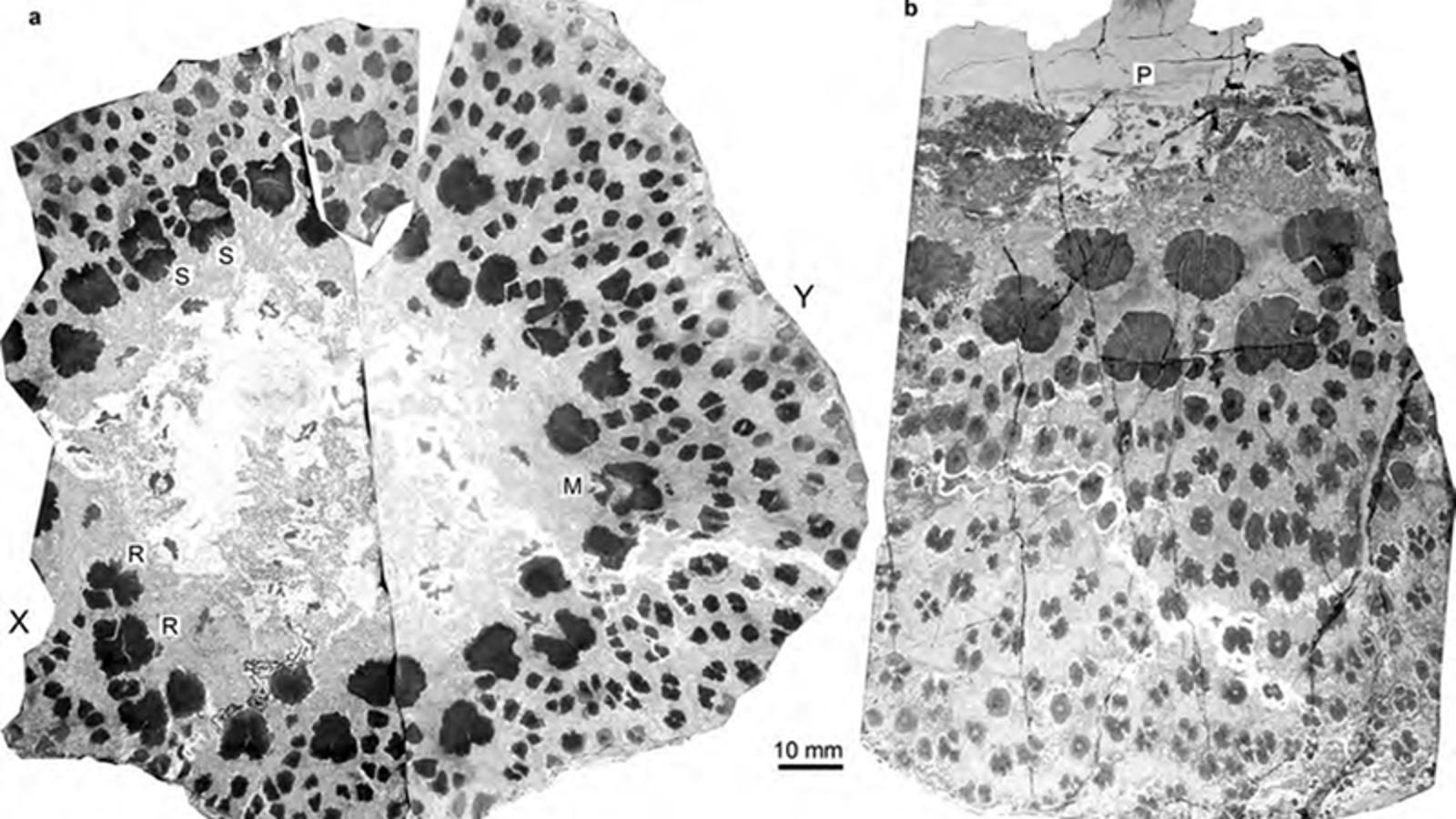 El tronco de los árboles prehistóricos era más extraño y complejo que el de los actuales, y no sabemos por qué