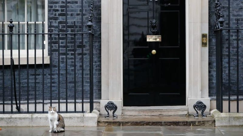Illustration for article titled Theresa May didn't want her resignation upstaged by the real star of British politics, Larry The Cat