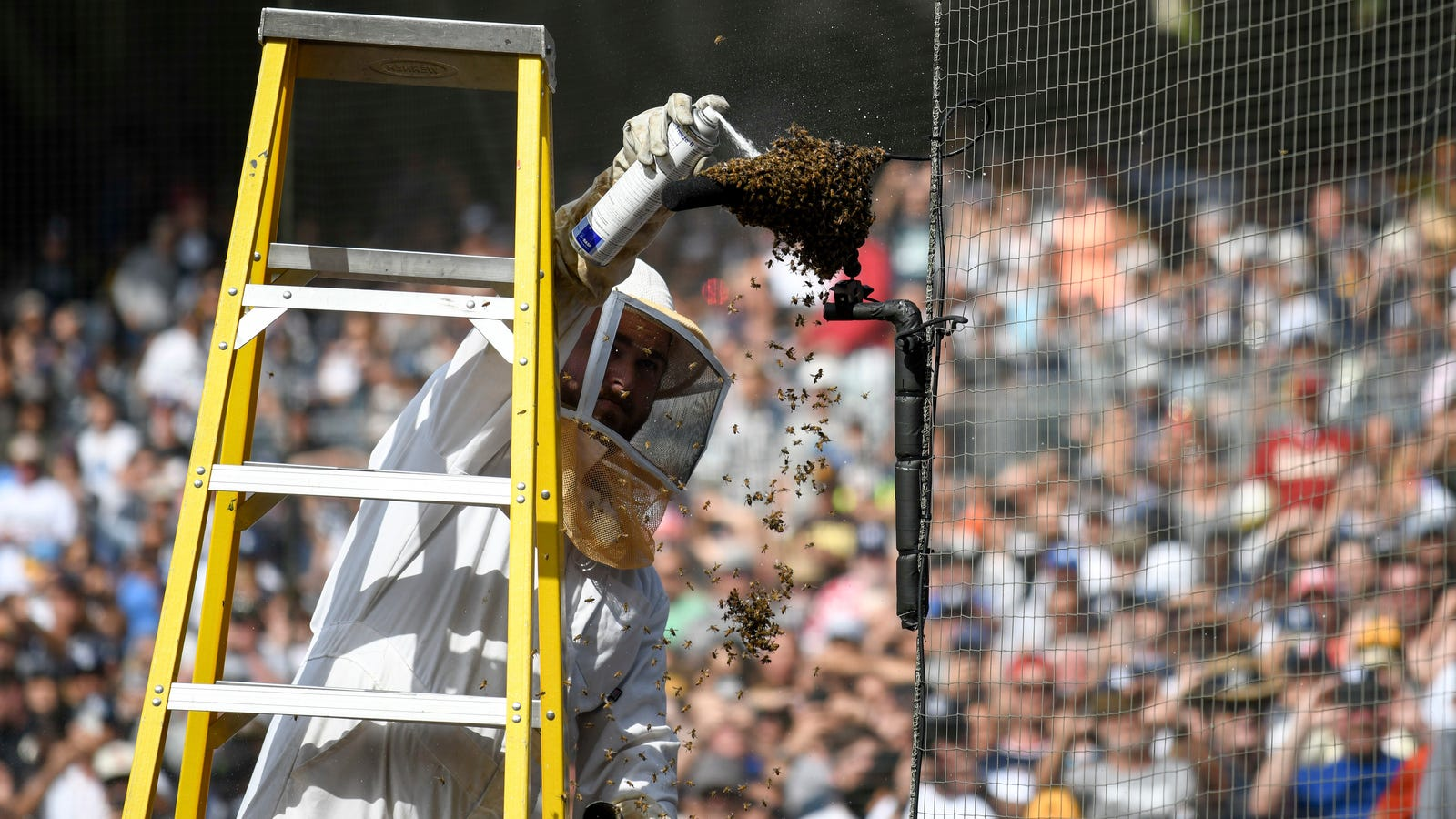 The Padres Killed A Lot Of Bees For Absolutely No Reason
