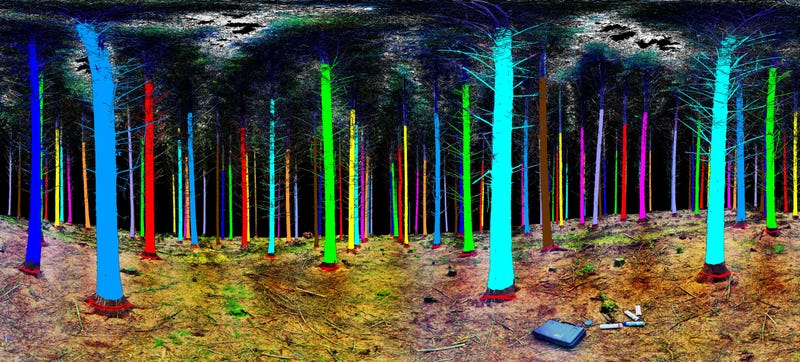 Illustration for article titled This Is What You See When You Scan a Forest With Lasers
