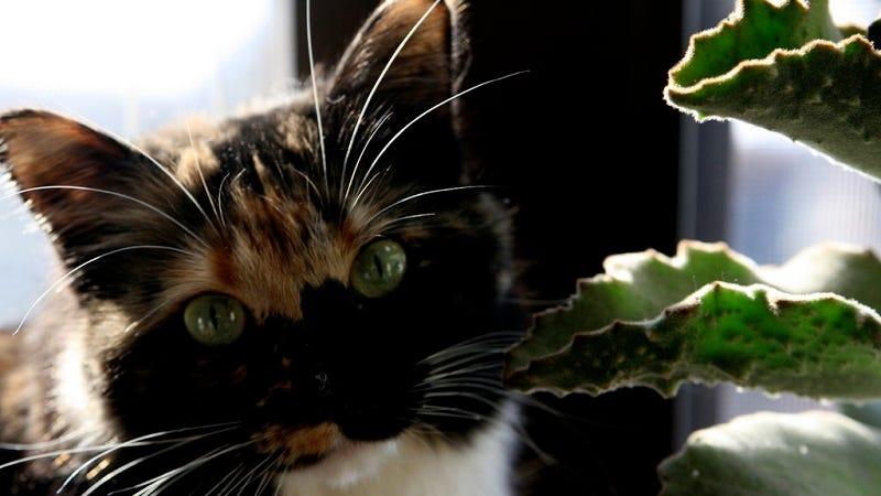 Five Easy Tips for Keeping Pets Away From Your Houseplants