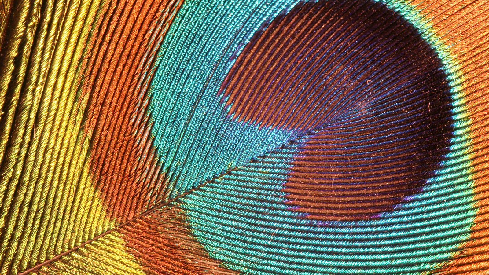 How Nanoscale Optics Create Nature's Most Dazzling Colors