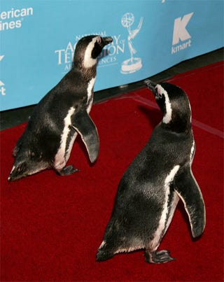 Illustration for article titled Wildlife Belong In The Wild, Not On The Red Carpet