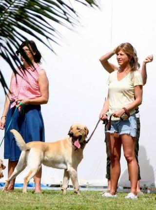 Illustration for article titled Jennifer Aniston's Cut-Off Denim, Cute Dog