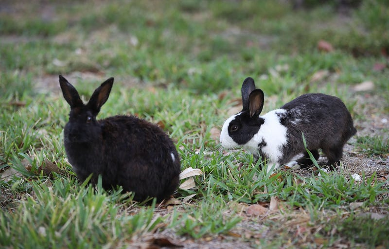 California Becomes First State to Pass Bill That Will Ban Sale of Cosmetics Tested on Animals