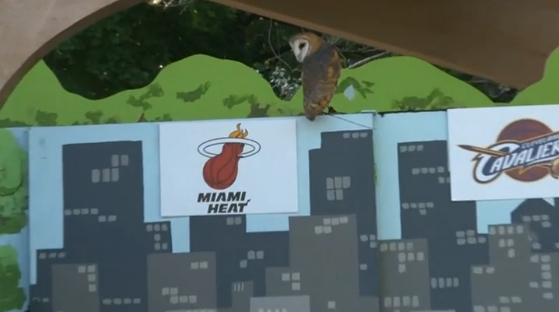 Illustration for article titled Cleveland Zoo Owl Betrays Her City, Predicts LeBron Will Stay In Miami
