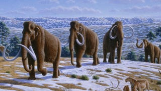 "Illustration for article titled Russian scientists: We have a ""high chance"" of cloning a wooly mammoth"