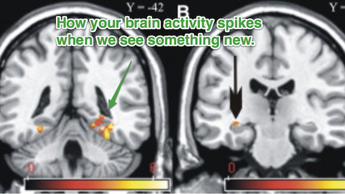 Novelty and the Brain: Why New Things Make Us Feel So Good