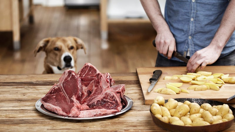 Illustration for article titled Raw-meat dog food may turn your home into a bacterial hellscape