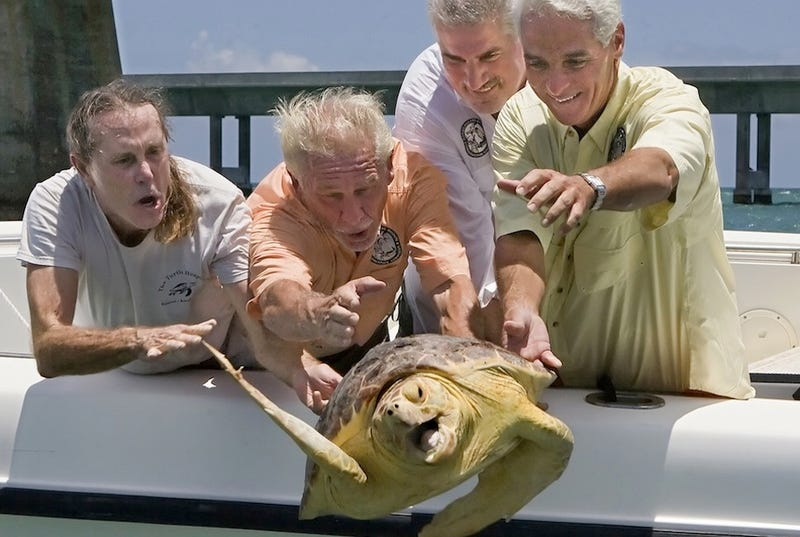 Illustration for article titled I Cannot Stop Looking At This Turtle Getting Thrown Off A Boat