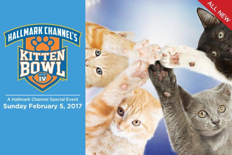 Illustration for article titled Kitten Bowl 2017!