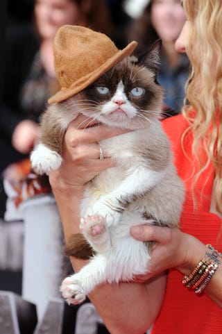 Illustration for article titled Grump Cat wore Pharell's hat to MTV awards