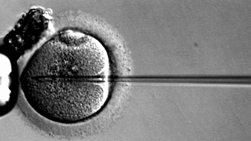 Illustration for article titled British Researchers Get Approval to Genetically Modify Human Embryos