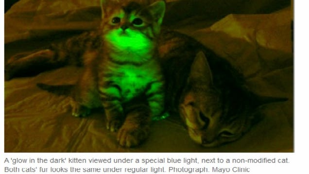 Scientists Produce Glow-in-the-Dark Cats