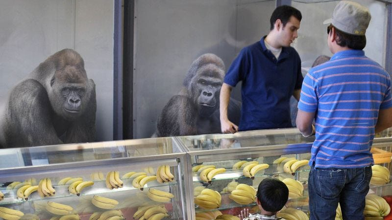 Statistics show sales of gorillas often spike sharply in the immediate aftermath of a major gorilla attack.
