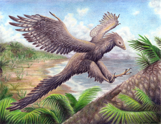 Illustration for article titled 19th century creationist used sexual perversion to explain bird evolution