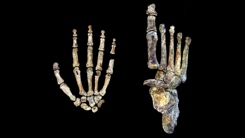 Newly Discovered Ancient Humans Were Tree Climbers Who