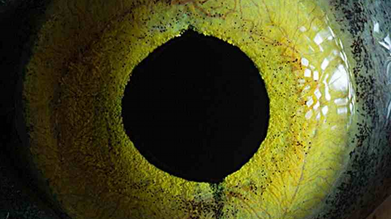 Illustration for article titled These Macro Shots of Animal Eyes Are Beautifully Striking