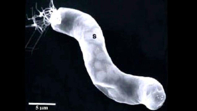 nasa found alien bacteria by -#main