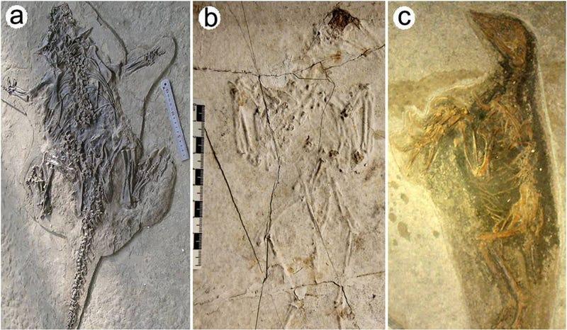 Illustration for article titled Un volcán sepultó a dinosaurios hace millones de años en China