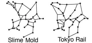 What Slime Molds And Subways Have In Common, According to ...
