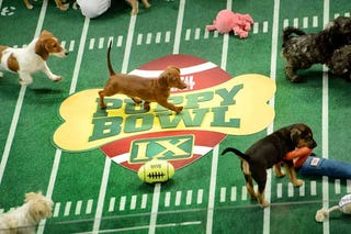 Illustration for article titled Almost time for Puppy Bowl!