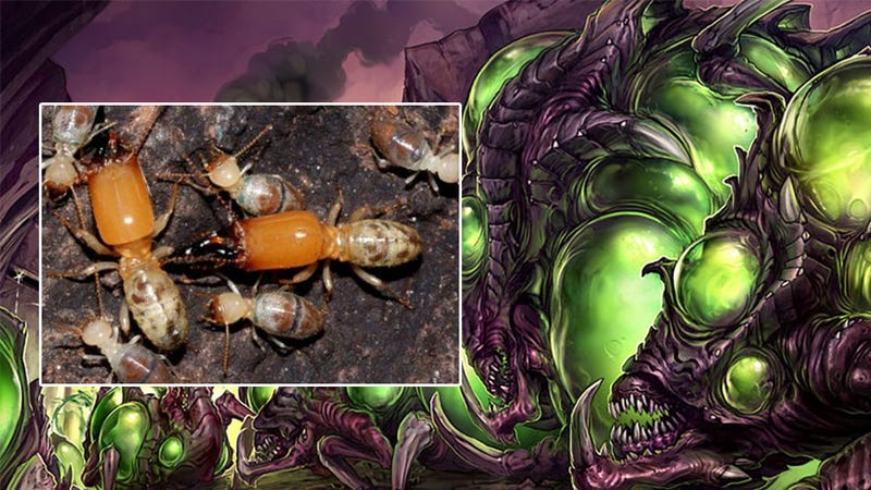 Illustration for article titled Meet the Real-World Counterpart to StarCraft's Explosive Zergling