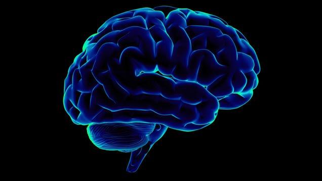 Neuroscientists Translate Brain Waves Into Recognizable Speech