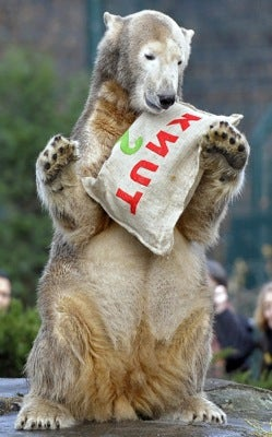 Illustration for article titled Knut To Stay In Berlin Zoo • Drunk Badger Disrupts Traffic