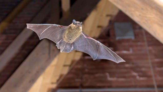 How to Quickly and Calmly Remove a Bat From Inside Your Home