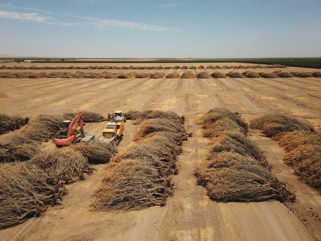 California's Farmers Face Unprecedented Water Restrictions
