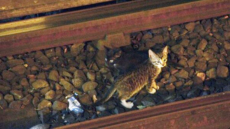 Illustration for article titled Subway Shuts Down After Adorable Kittens Get Loose on Tracks