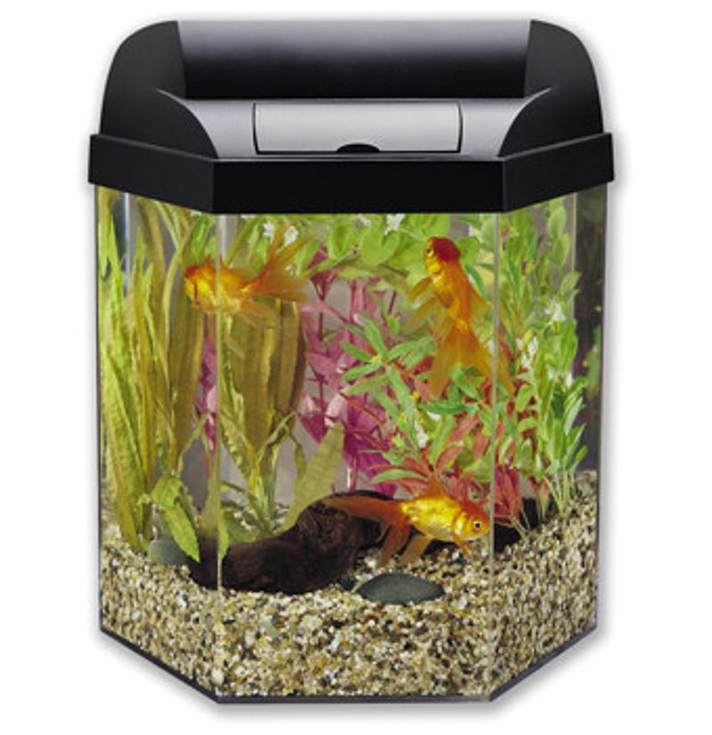 which fish are cubicle friendly office desk aquarium
