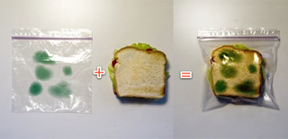 Illustration for article titled Anti-Theft Lunch Bag Deters Sandwich Thieves
