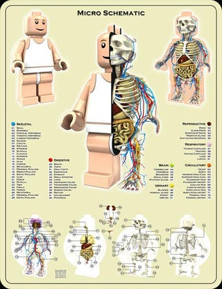 Illustration for article titled The Anatomy of a Lego Minifig Is as Fascinating as It Is Spooky