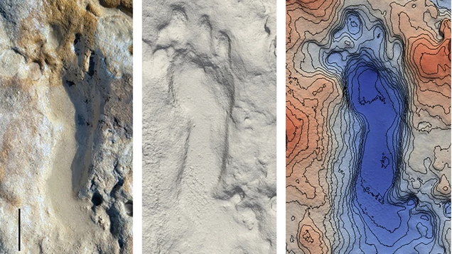 Dozens of Fossilized Neanderthal Footprints Found on a Beach in Spain
