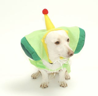 Illustration for article titled Fun Ways to Torture Your Pets: Katamari Damacy Costume