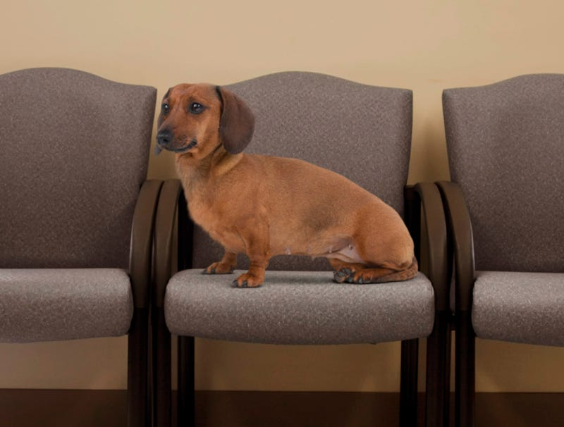 Illustration for article titled Prick Veterinarian Keeps Dachshund Waiting In Empty Lobby For 45 Minutes